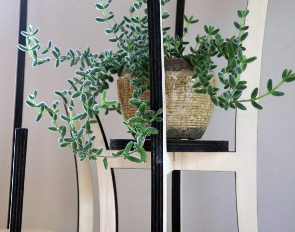 plantenstandaard, hout, sokkel, staander, bloempot, interieur objecten, design, Peter Coucke